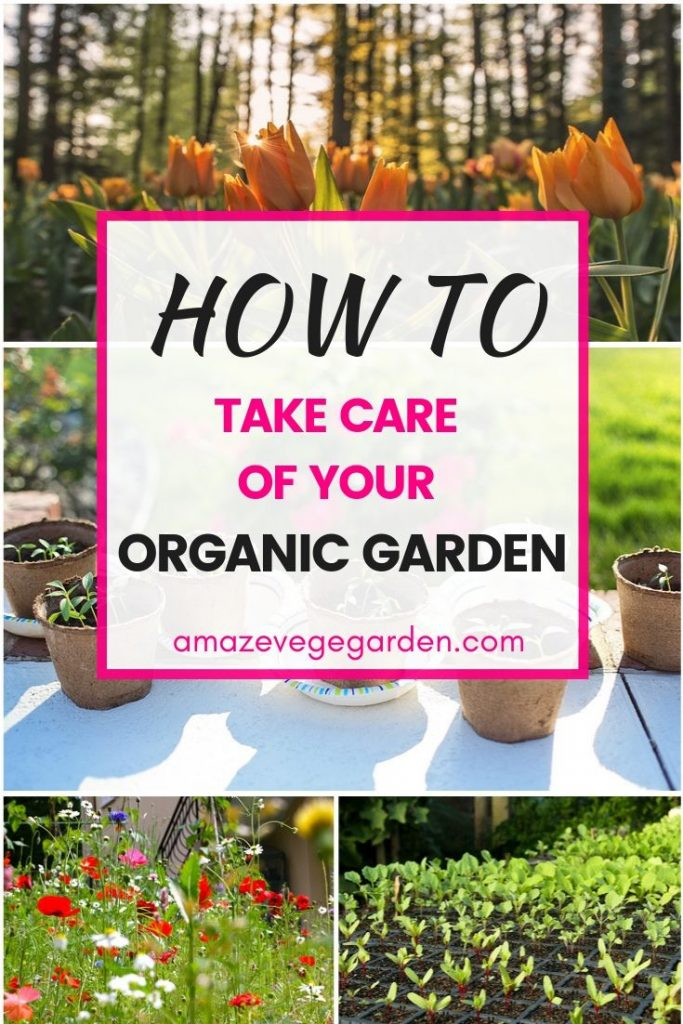 how to take care of your organic garden