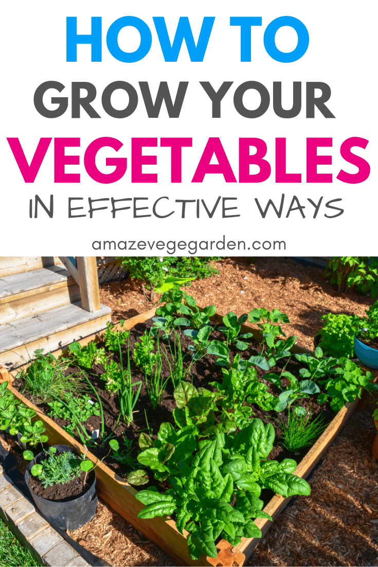 How to grow your vegetables