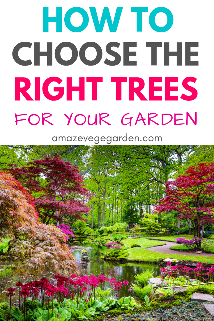 How to Choose the Right Trees for Your Garden