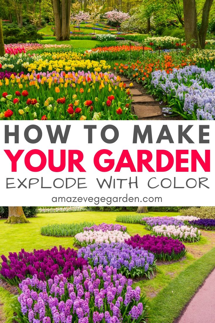 how to make your garden explore with color