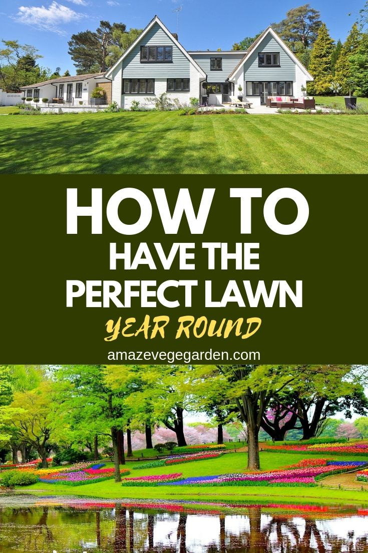 how to have the perfect lawn