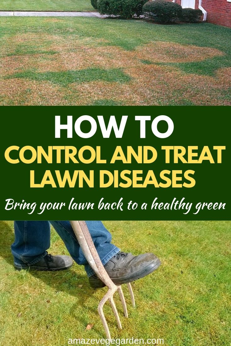 how to control treat lawn diseases