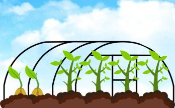 greenhouse for plant