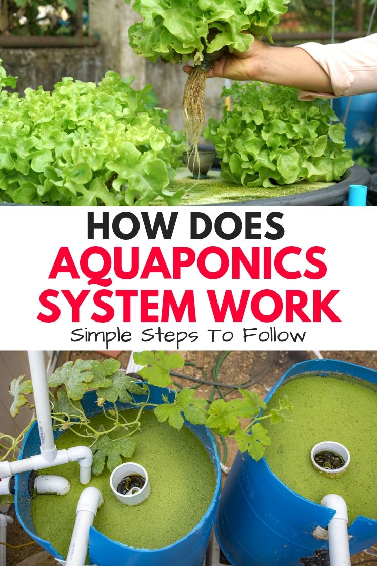 How Does An Aquaponics System Work