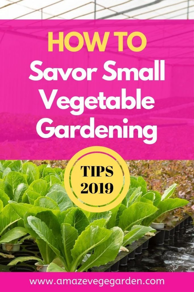 The Beauty of Small Vegetable Gardening