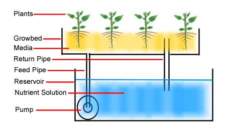 The Flood and Drain Hydroponics System and its Components