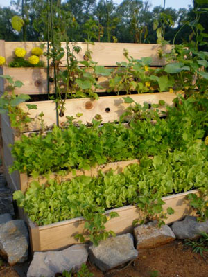 Urban Garden Raised Bed
