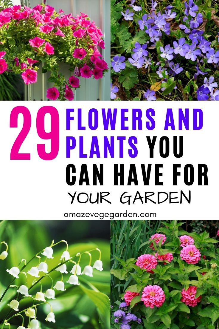 29 flowers and plants you can have for your garden