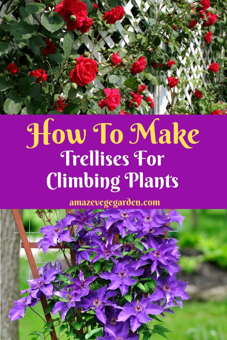 how to make trellises for climbing plants