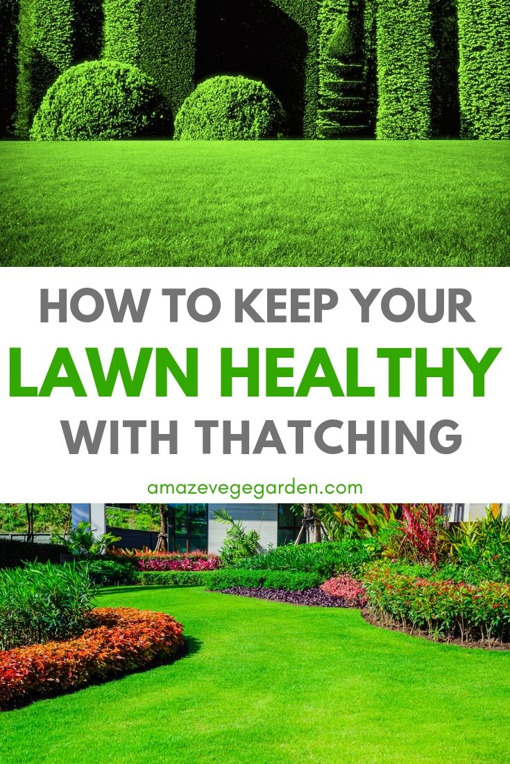 how to keep your lawn healthy with tahtching.