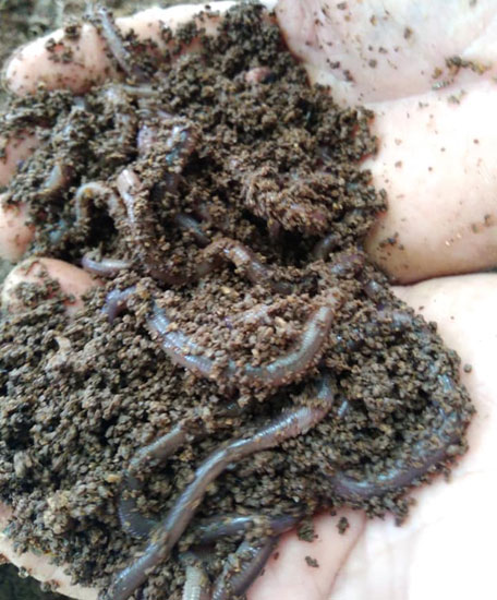 worms in hand