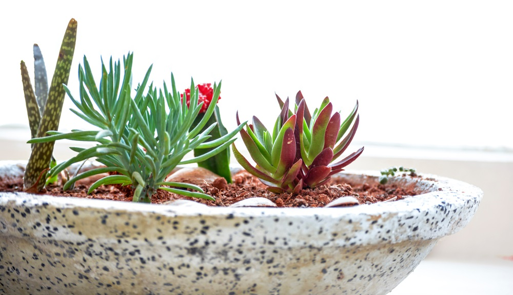 Basics of Growing Succulents