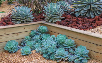 basics of growing succulents for beginners