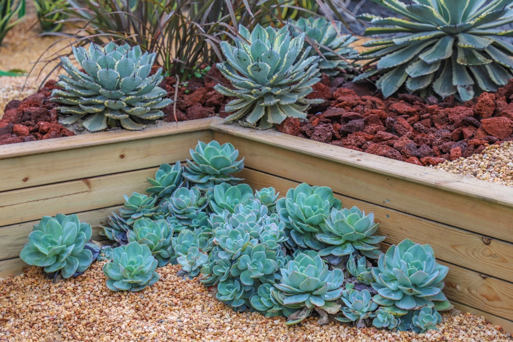 succulents plant care