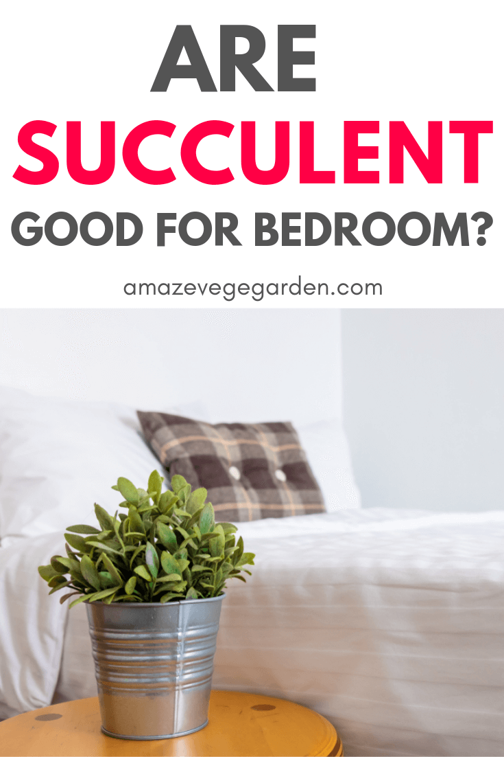 Are succulents good for bedroom