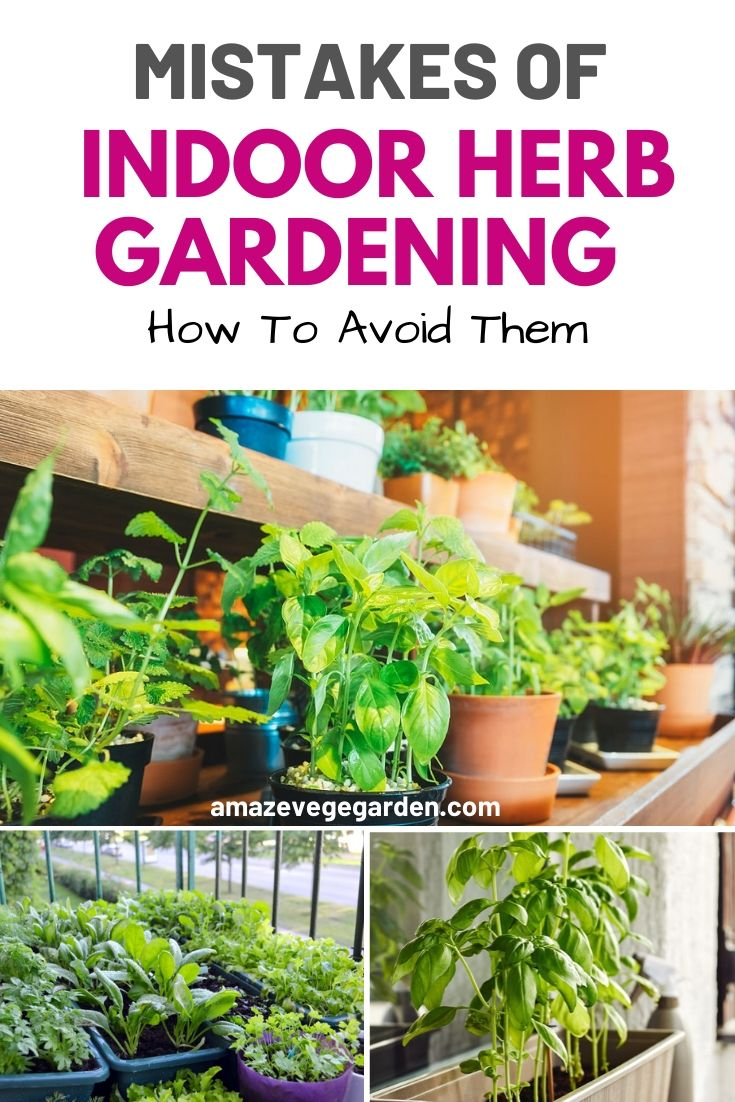 Mistakes Of Indoor Herb Gardening and How To Avoid Them