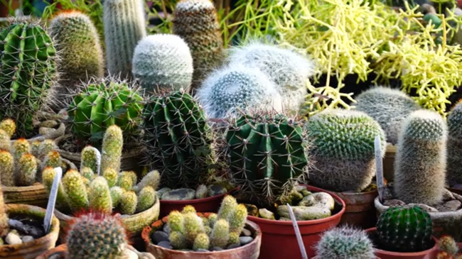 How to Take Care Of Your Succulent Plant