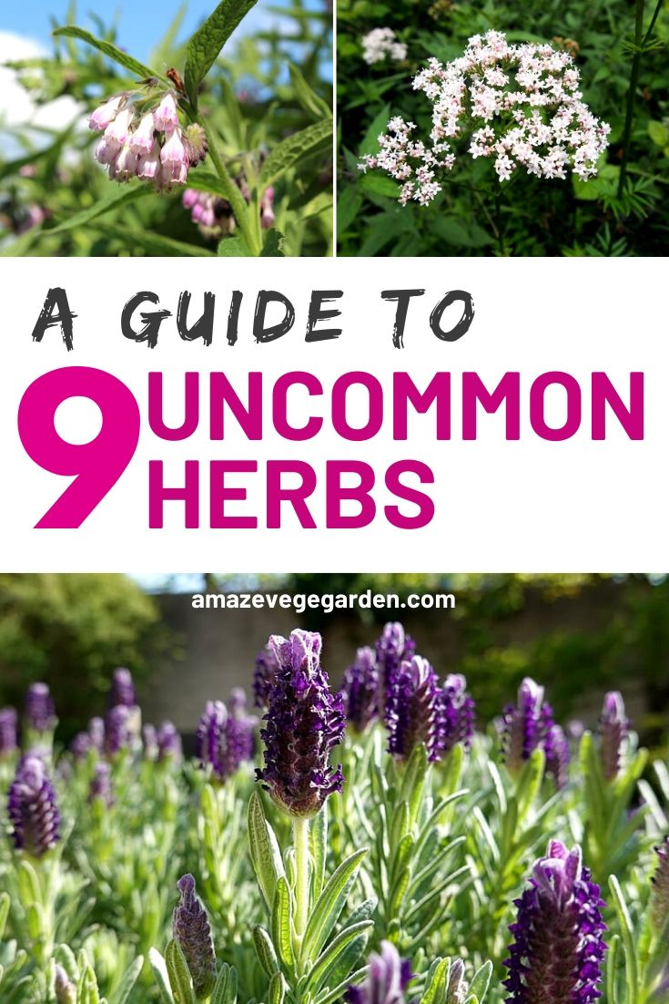 A Guide To 9 Uncommon Herbs