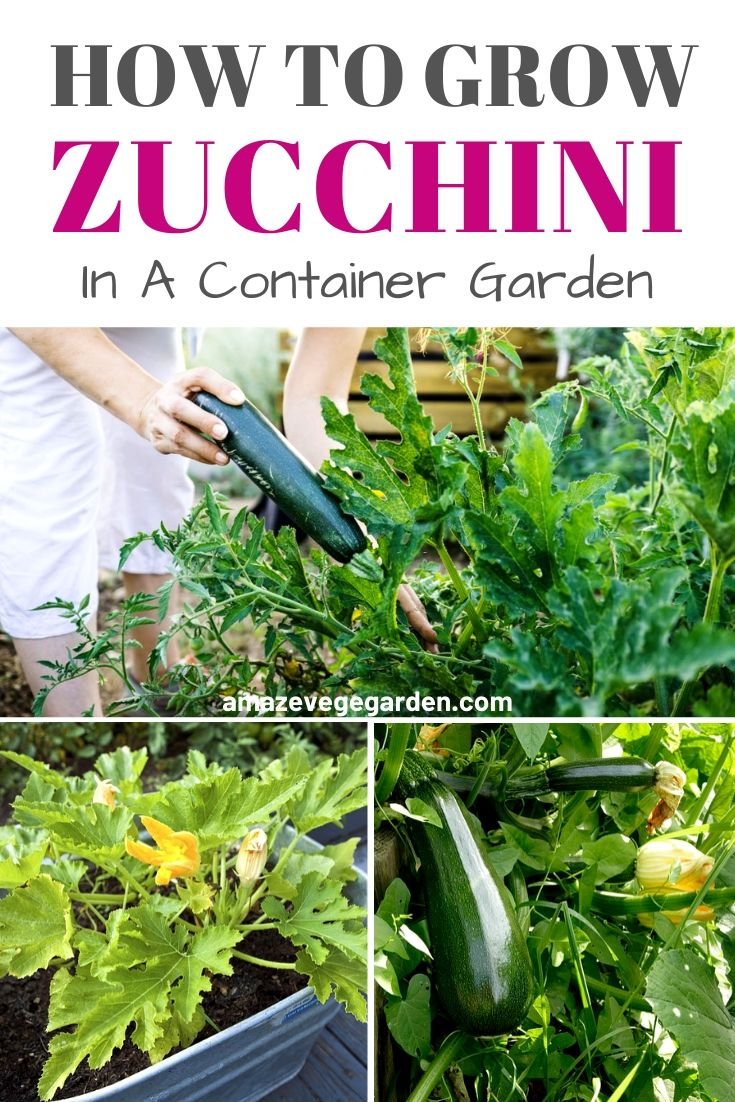 How To Grow Zucchini In A Container Garden