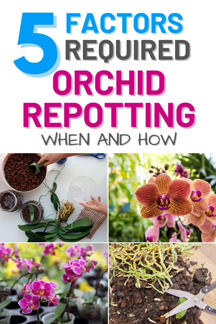 5 Factors Required For Orchid Repotting – When and How
