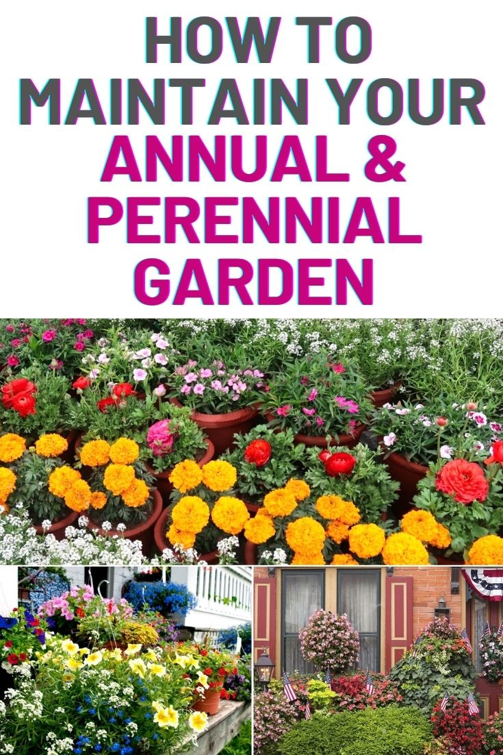 how to maintain your annual and perennial garden