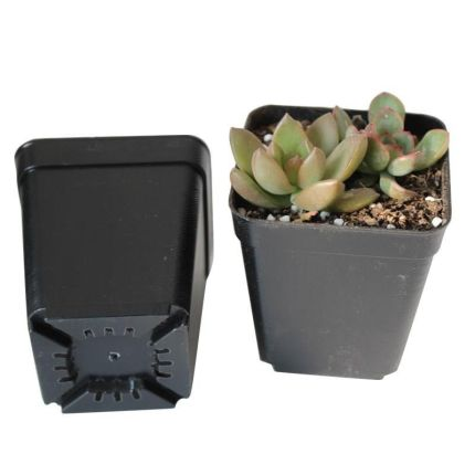 Plastic Planting Pots Thermoformed Square
