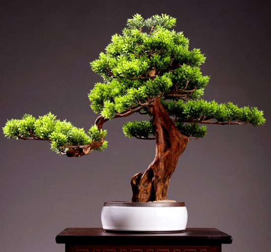 clumped bonsai