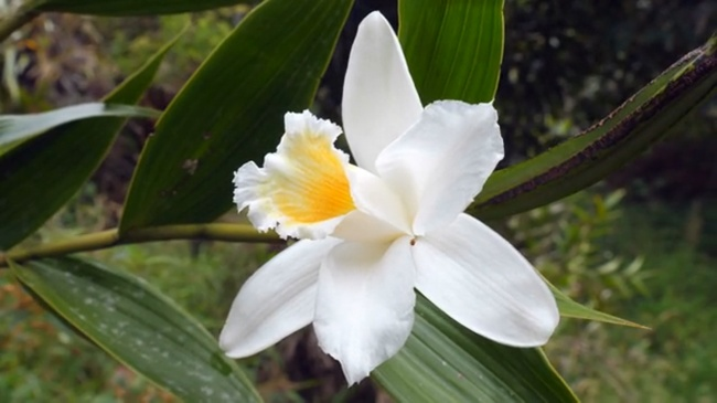 planting orchid