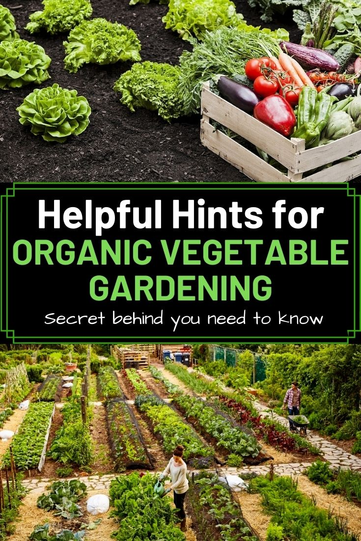 Helpful Hints for Organic Vegetable Gardening