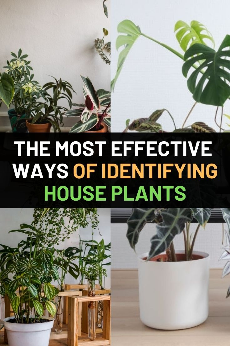 The Most Effective Ways Of Identifying House Plants