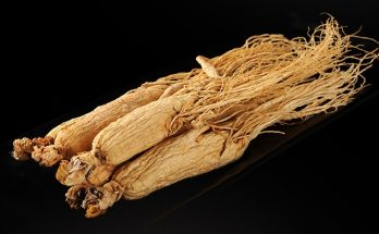 ginseng harvested