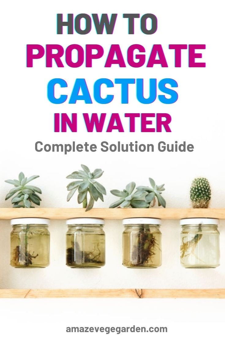How to Propagate Cactus in Water