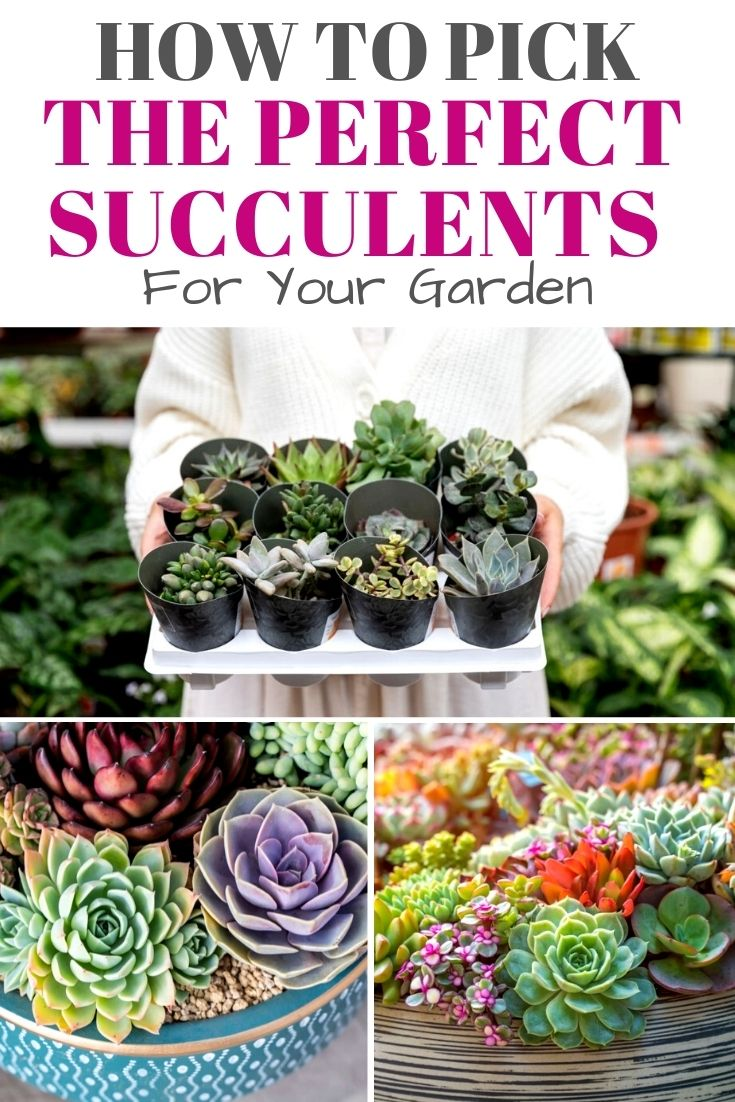 How to Pick the Perfect Succulent