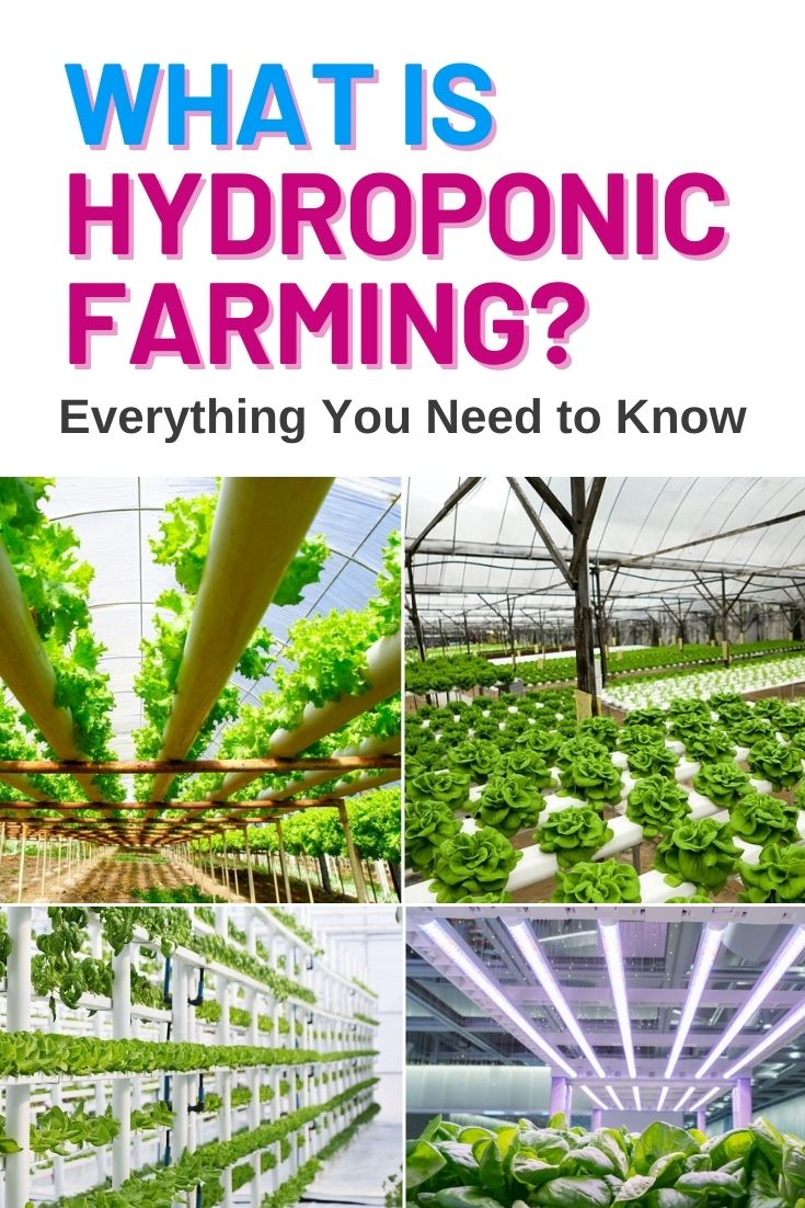 What is Hydroponic Farming Everything You Need to Know