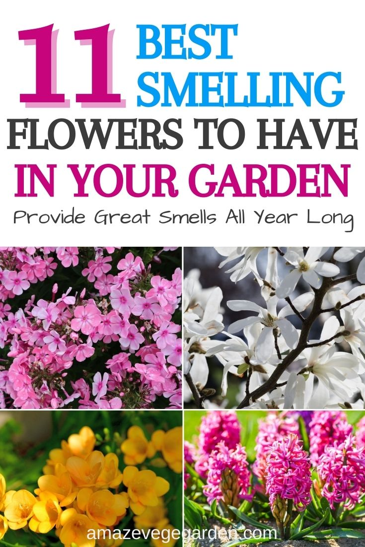 11 Best Smelling Flowers to Have in Your Garden