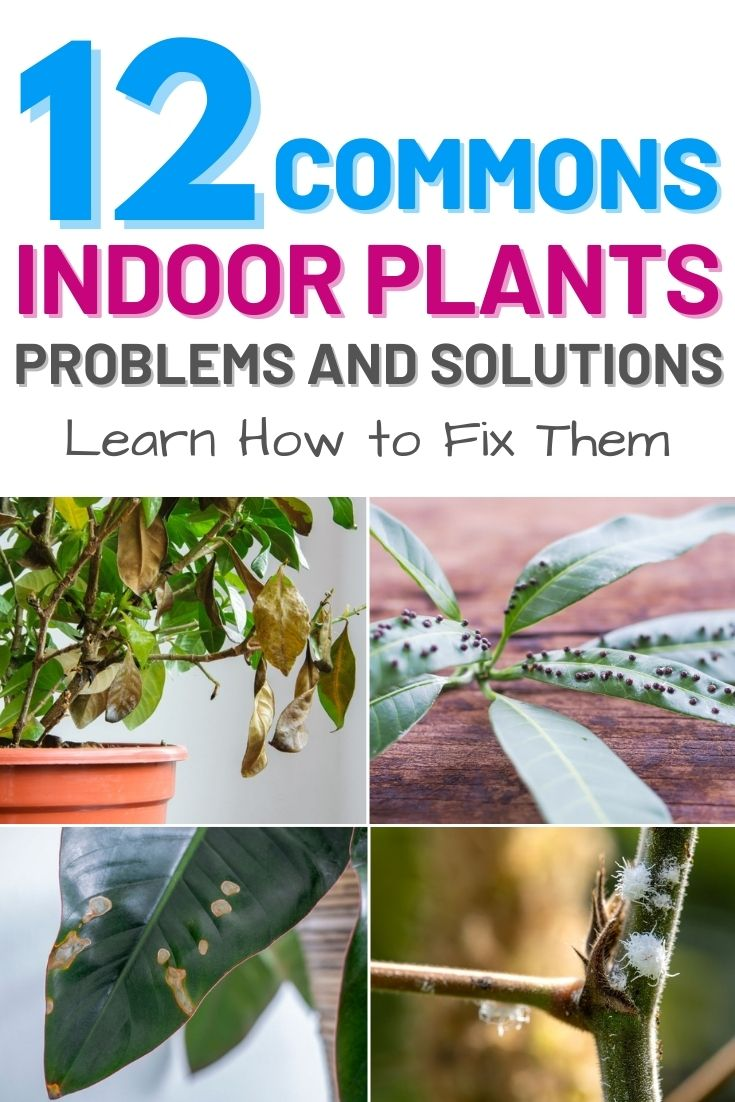 12 Common Indoor Plant Problems and How to Fix Them