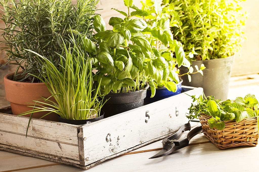 Why Grow Vegetables Indoors