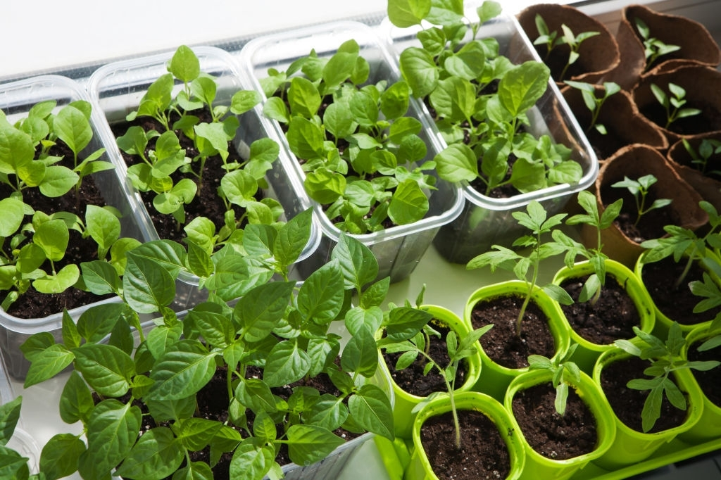 Containers for Indoor Vegetables