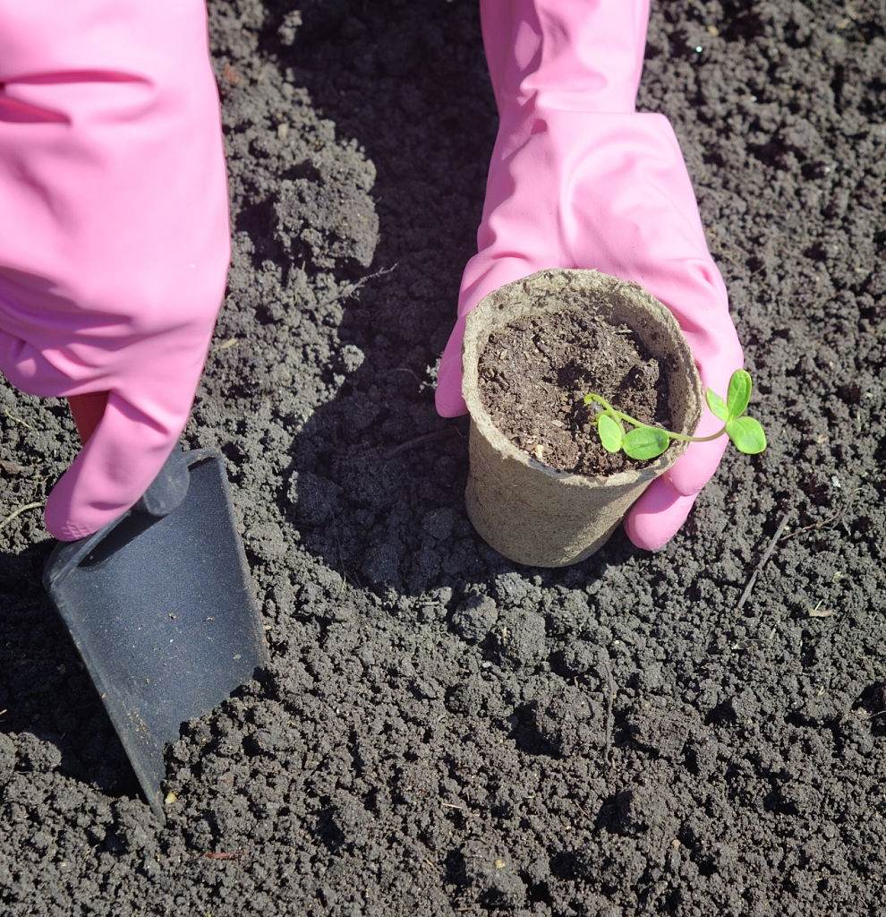 Plot and Dig Your New Flower Garden