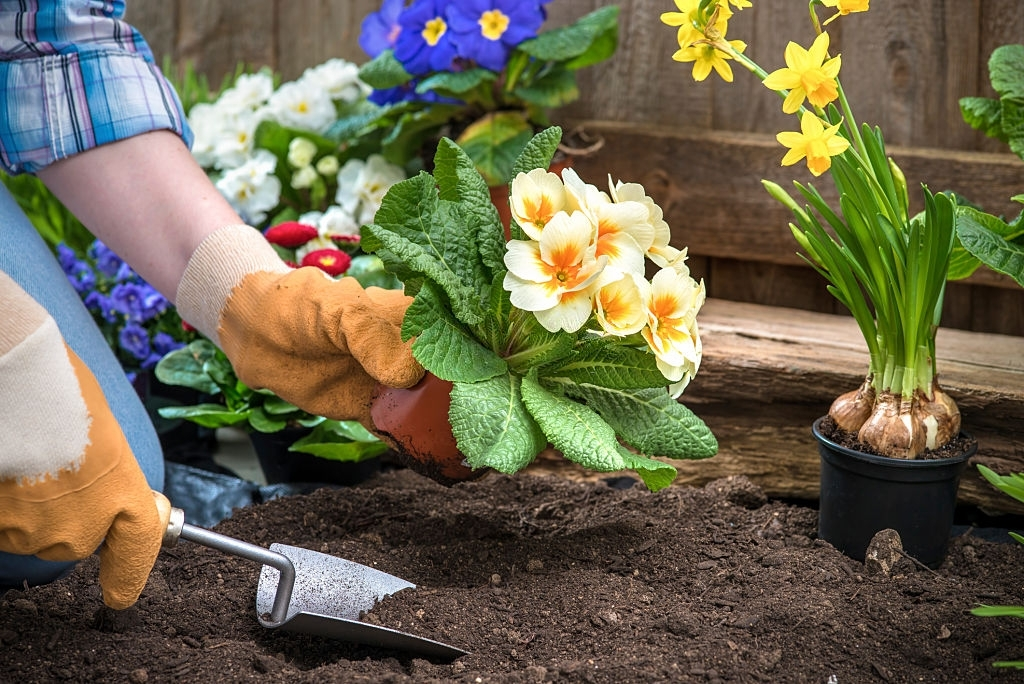 Planting Flowers in the New Garden