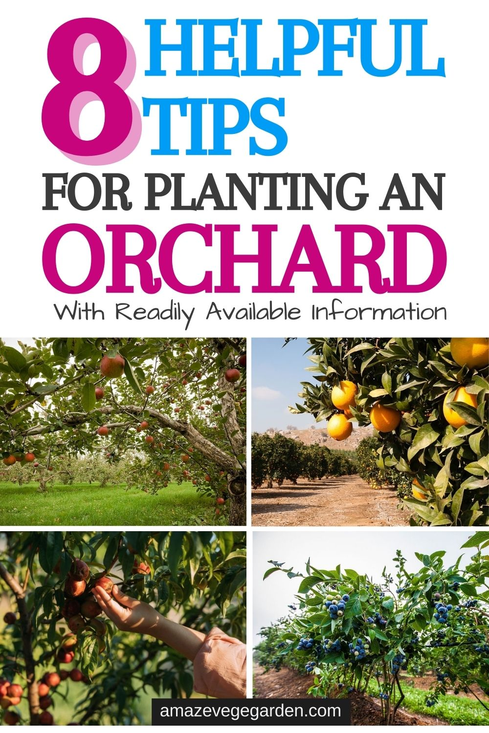 8 Helpful Tips For Planting An Orchard