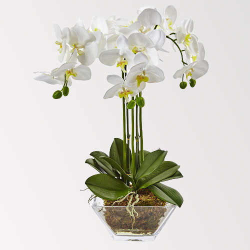 Artificial Phalaenopsis Flowers with Vase