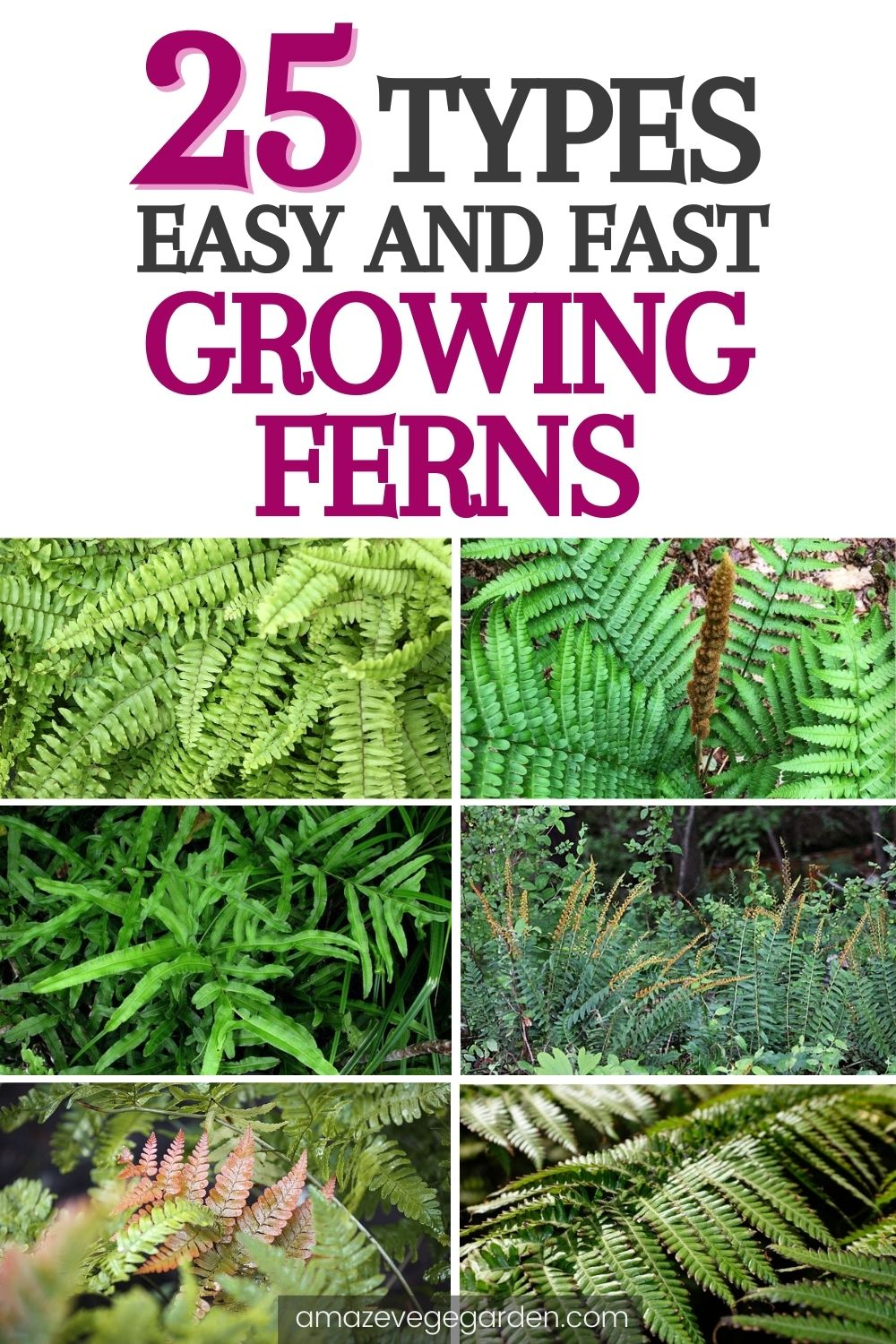 25 Types of Easy and Fast Growing Ferns