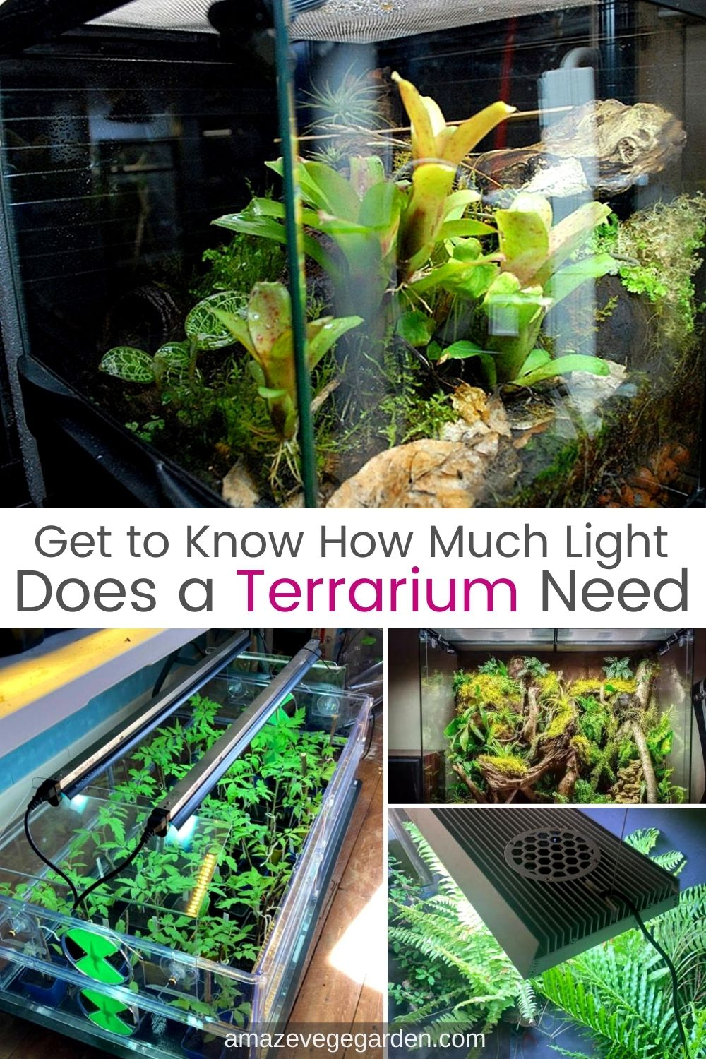 Get to Know How Much Light Does a Terrarium Need