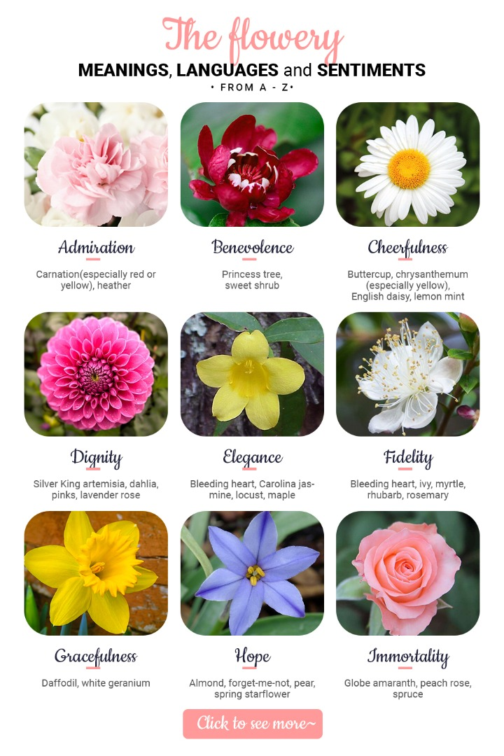 The Flowery Meanings, Languages and Sentiments – A to Z