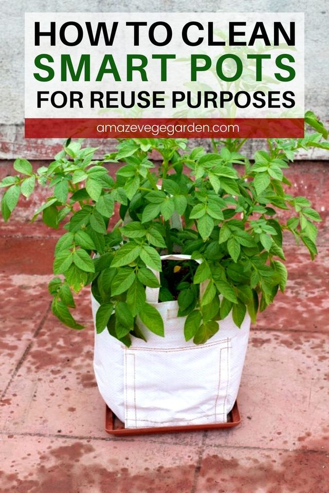 Smart Pots - How To Clean Them for Reuse Purposes