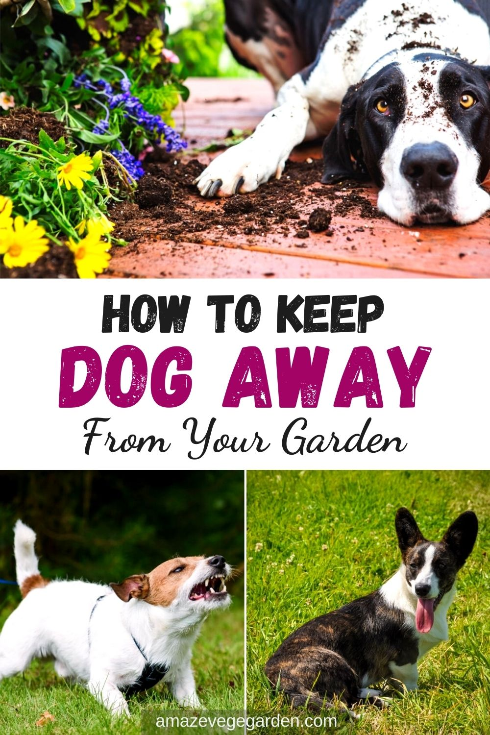 How To Keep Dog Away From Your Garden