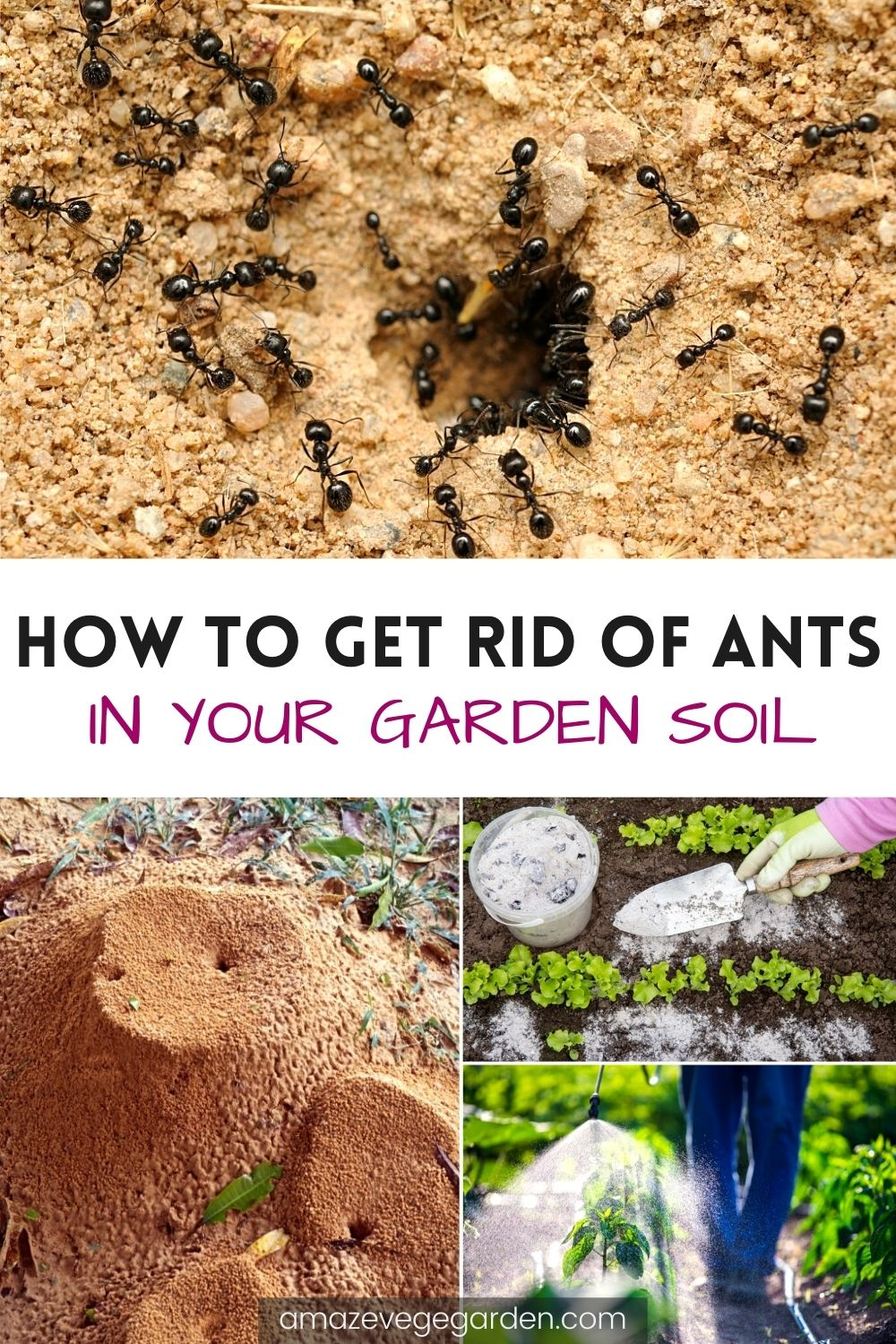 How To Get Rid of Ants In Your Garden Soil