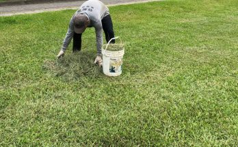 grass clippings mulch