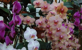 orchids care sheet